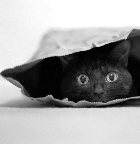 Кот в мешке как понимать